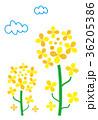 春 菜の花 花のイラスト 36205386