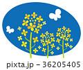 菜の花 花 植物のイラスト 36205405
