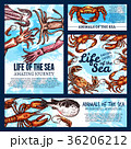 Vector sea life posters of sketch fish animals 36206212