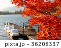 河口湖 紅葉 秋の写真 36208337