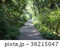 道 山中 森林の写真 36215047