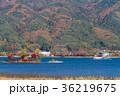 河口湖 紅葉 秋の写真 36219675