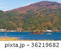河口湖 紅葉 風景の写真 36219682