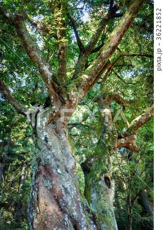 常緑樹、エコロジーイメージ 36221852