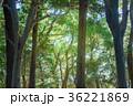 エコロジー 緑 森の写真 36221869