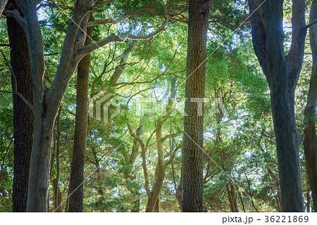 深い森の中 36221869