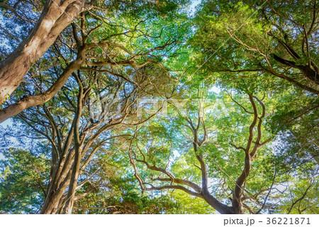深い森の中 36221871
