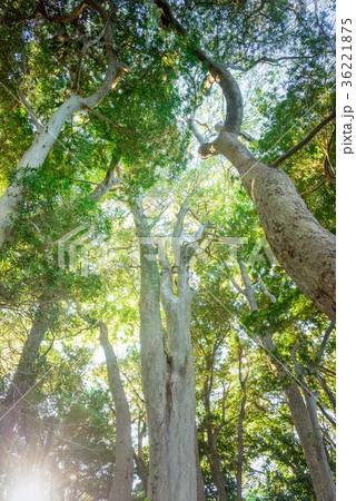 深い森の中 36221875