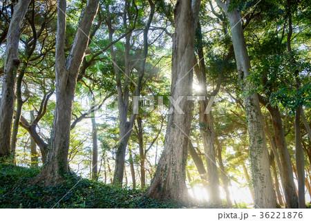 深い森の中 36221876
