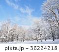 積雪の木々 36224218