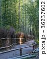 京都 嵐山 嵯峨野の写真 36237602