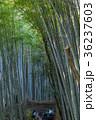 京都 嵐山 嵯峨野の写真 36237603
