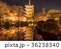 京都 紅葉 秋の写真 36238340