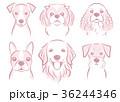 犬のイラスト 36244346