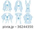 犬 動物 ペットのイラスト 36244350