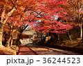 毘沙門堂 紅葉 秋の写真 36244523