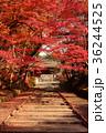 毘沙門堂 紅葉 秋の写真 36244525
