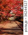 毘沙門堂 紅葉 秋の写真 36244527