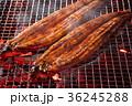鰻の蒲焼 36245288