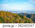 高尾山 秋の登山道 稲荷山コース あずま屋から都心方面の見晴らし 36245547