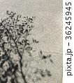木の影 アート 美術 36245945