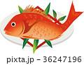 鯛 魚 お頭付きのイラスト 36247196