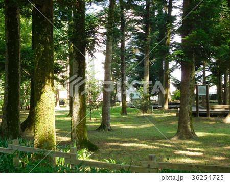 多摩平の森 36254725