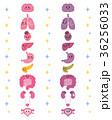 健康な臓器 弱った臓器 内臓 キャラクター 36256033