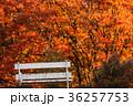 愛知県 名古屋市 名城公園秋風景 36257753