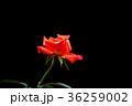 背景 黒色 黒の写真 36259002