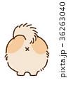 犬 ポメラニアン 小型犬のイラスト 36263040