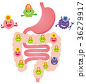 腸内フローラ 善玉菌 悪玉菌 日和見菌 36279917