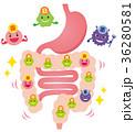 腸内フローラ 善玉菌 悪玉菌 日和見菌 36280581