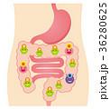 腸内フローラ 善玉菌 悪玉菌 日和見菌 36280625
