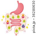 腸内フローラ 善玉菌 悪玉菌 日和見菌 36280630
