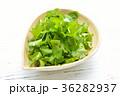 パクチー、香菜、タイ料理、エスニック料理、ハーブ。 36282937