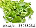 パクチー、香菜、タイ料理、エスニック料理、ハーブ。 36283238
