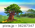 Solitary Large Oak on a Hill 36287347