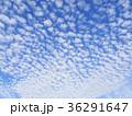 羊雲 高積雲 雲の写真 36291647