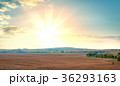 Sunrise over fields and distant woods 36293163