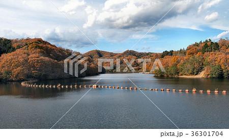 飯田ダムの紅葉 36301704