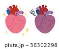 心臓 臓器 健康のイラスト 36302298