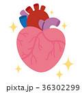 健康な心臓 臓器 36302299