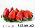 いちご イチゴ 苺の写真 36309102