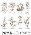 植物 フラワー 花のイラスト 36315432