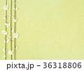 梅 白梅 花のイラスト 36318806