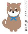 犬 柴犬 豆柴のイラスト 36320020