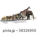 Set of African Animals 36326950