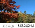 高知公園の秋 36328248