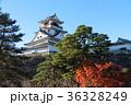 高知城の秋 36328249